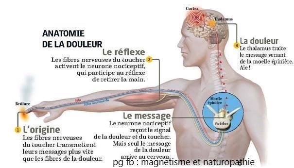 anatomie de la douler