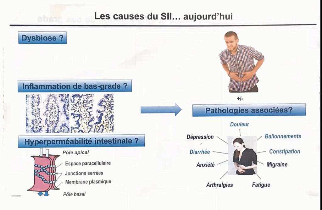 Cette image a un attribut alt vide; le nom du fichier est hypermeabilite-intestinale-dysbiose.png